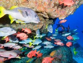 Heridas por corales