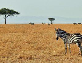 Sudáfrica, para el viajero aventurero