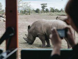 Los mejores safaris en África