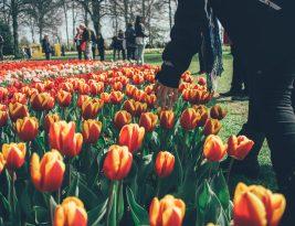 Destinos de primavera